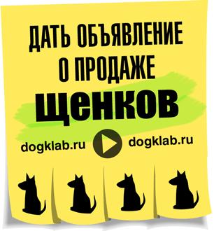 Где дать объявление о продаже щенков как подать объявление в газету все для вас омск